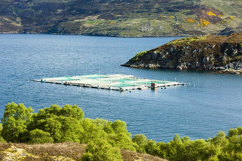 inmara marine advice Scottish Highlands, Aquaculture, Scotland